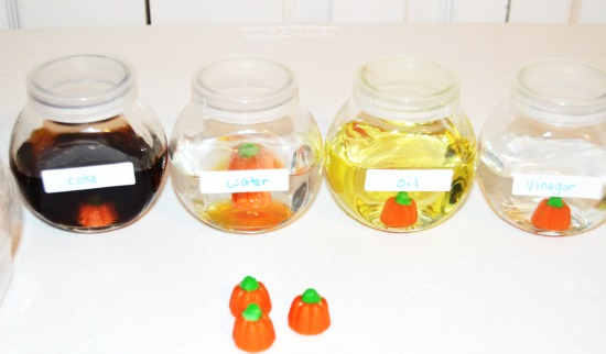 Fall or Halloween Science Experiment Freebies! Grab free printables to complete a fall science experiment that involves dissolving candy pumpkins in various liquids. Perfect for fall and Halloween!
