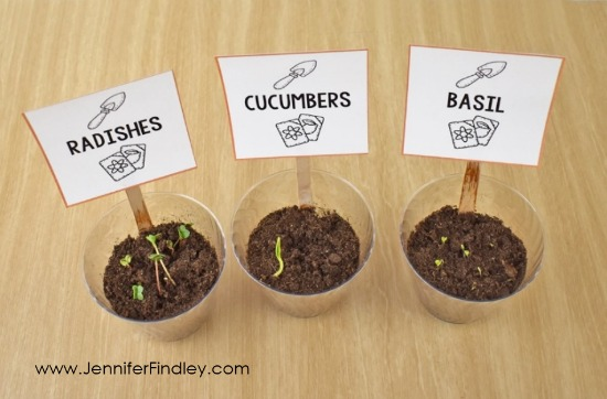 Have a seed race this spring! Read more and grab free printables and a reading passage to complete this science activity with your 4th and 5th graders.