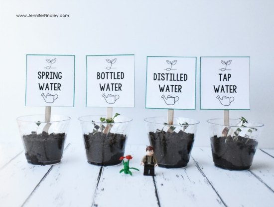 What affect does water types have on plant growth? Read more and grab free printables and a reading passage to complete this science experiment with your 4th and 5th graders.