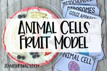 Edible animal cells are sure to help your students remember the different animal cell organelles and their functions. Read more and grab free vocabulary posters on this post!