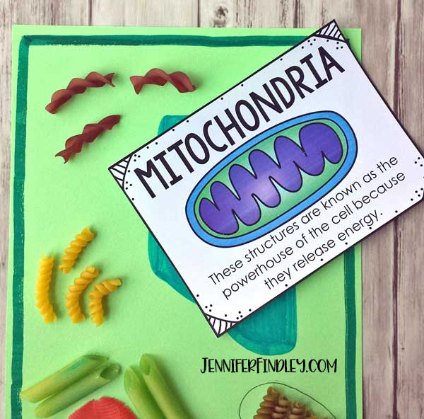 Make plant cell models with noodles! Get the details and grab free vocabulary posters here.