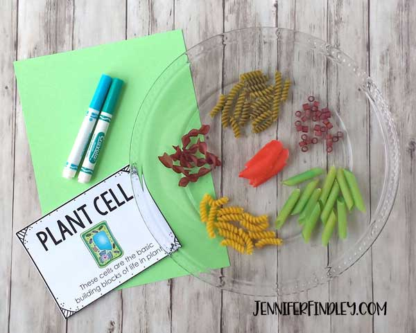 Help your students remember plant cells and their organelles by making a cell model using noodles! Read more and get free vocabulary posters!